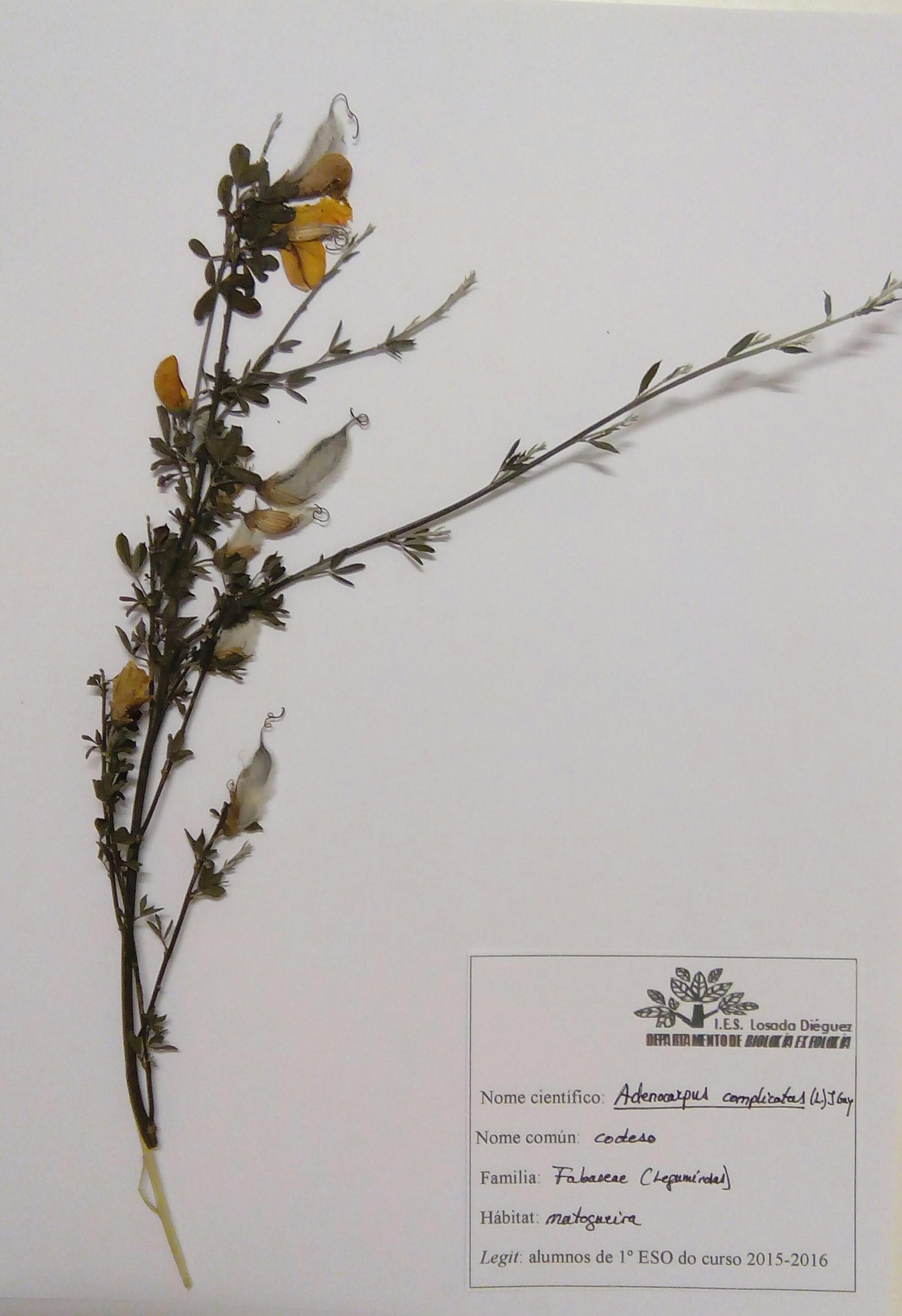 Herbario-codeso