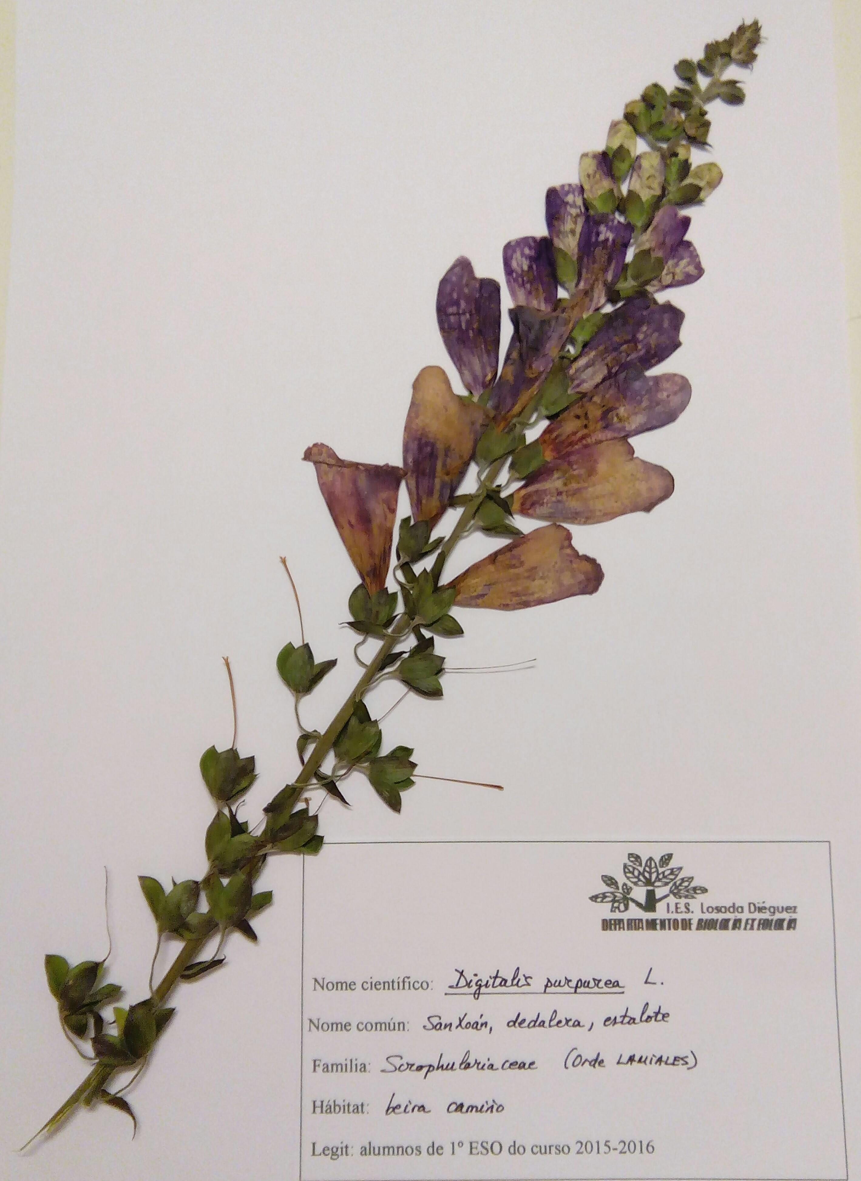Herbario-digital