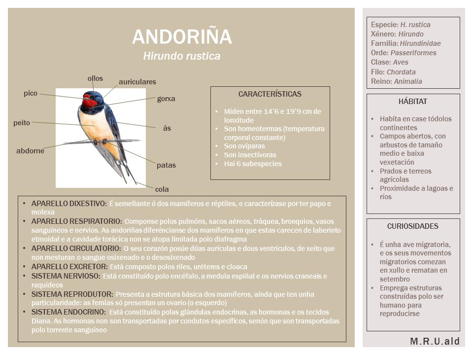 Infografía andoriña. María Ribadavia Uzal