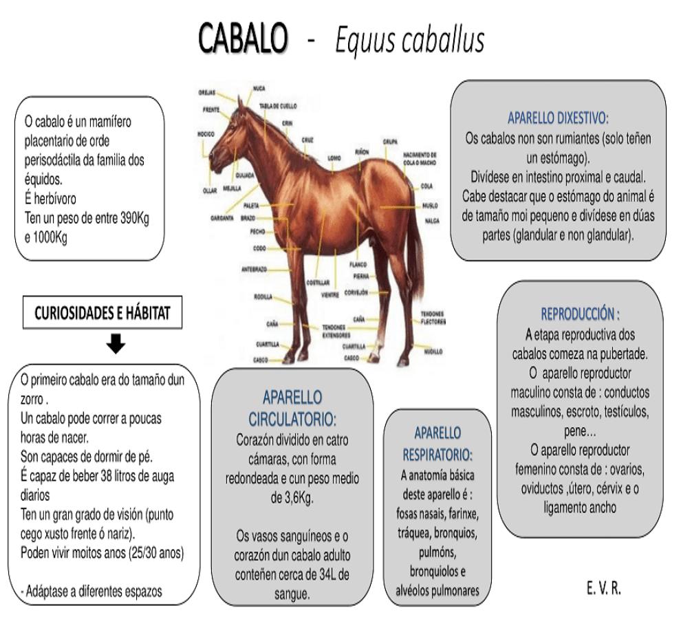 VILLAMAYOR - CABALO - Equus caballus